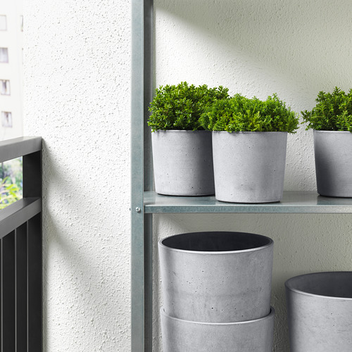 BOYSENBÄR pot tanaman