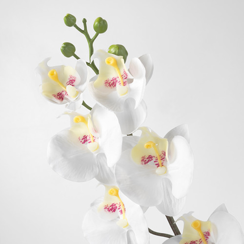 SMYCKA - artificial flower, Orchid/white, 60 cm | IKEA Indonesia - PE596752_S4