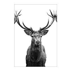 BJÖRKSTA - Gambar, Horns