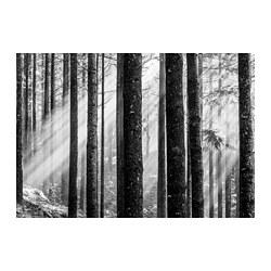 BJÖRKSTA - Gambar, Sunbeams