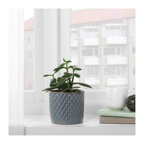 CHIAFRÖN pot tanaman