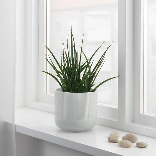 GRADVIS - plant pot, grey, 15 cm | IKEA Indonesia - PE687034_S4