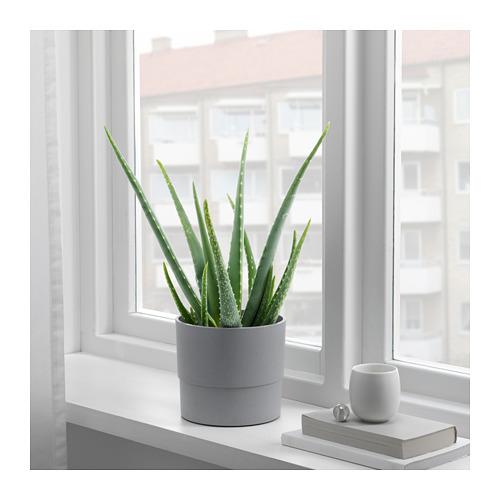 NYPON pot tanaman