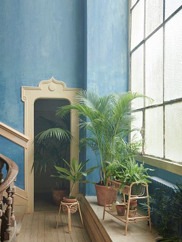 BUSKBO stand tanaman