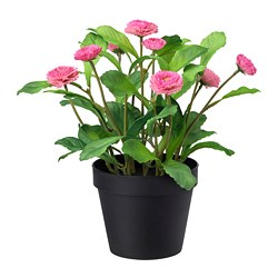 FEJKA - Artificial potted plant, in/outdoor/Common daisy pink
