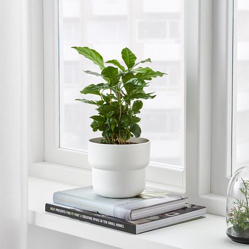 FÖRENLIG pot tanaman