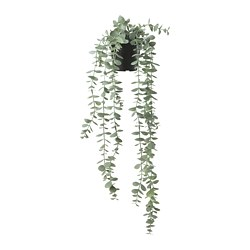 FEJKA - Artificial potted plant, in/outdoor hanging/eucalyptus