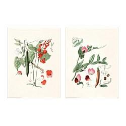 BILD - BILD, poster, Botanical, 30x40 cm