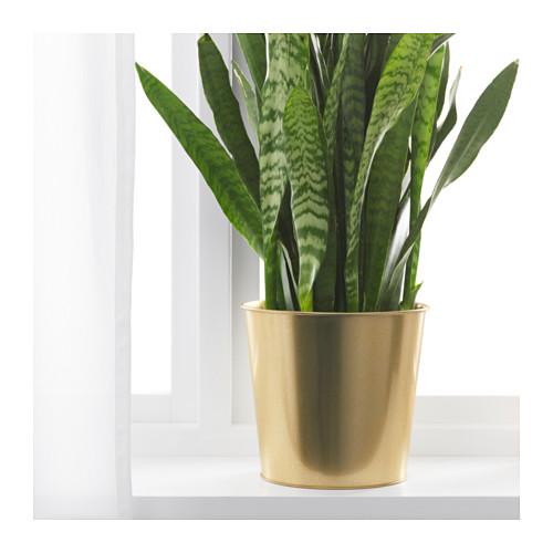 DAIDAI pot tanaman