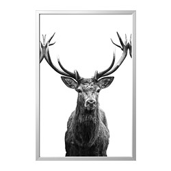 BJÖRKSTA - Picture with frame, Horns/aluminium-colour