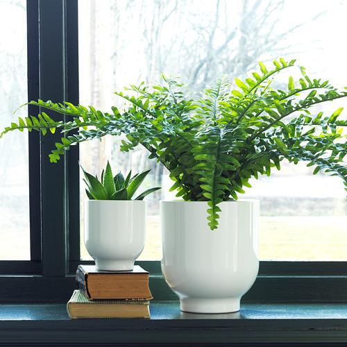 DRÖMSK pot tanaman