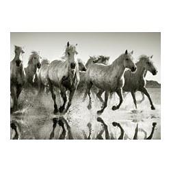 PJÄTTERYD - PJÄTTERYD, gambar, Wild horses, 70x50 cm