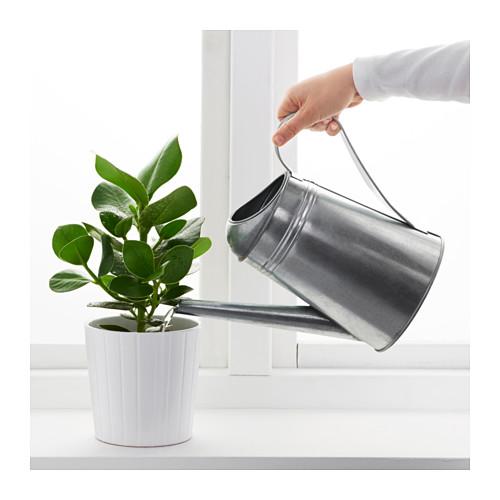 SOCKER penyiram tanaman