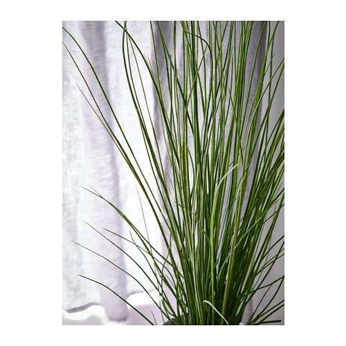 FEJKA - tanaman tiruan dalam pot, rumput, 17 cm   IKEA Indonesia - PE386526_S4
