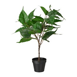FEJKA - Artificial potted plant, in/outdoor Fig
