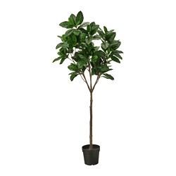 FEJKA - FEJKA, tanaman tiruan dalam pot, dalam/luar ruang Magnolia, 23 cm