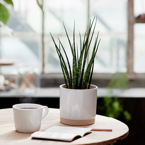 UPPVAKTA pot tanaman
