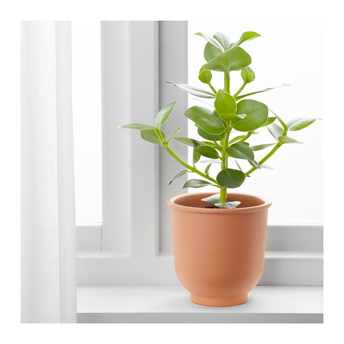 BRYTÄRT pot tanaman