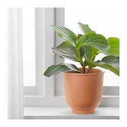 BRYTÄRT - Pot tanaman, merah-cokelat