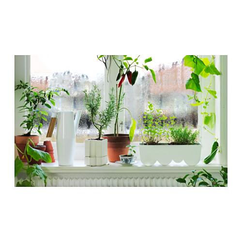 BITTERGURKA penyiram tanaman