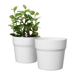 MAJSKORN - Pot tanaman, putih