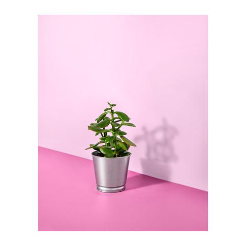 BINTJE pot tanaman