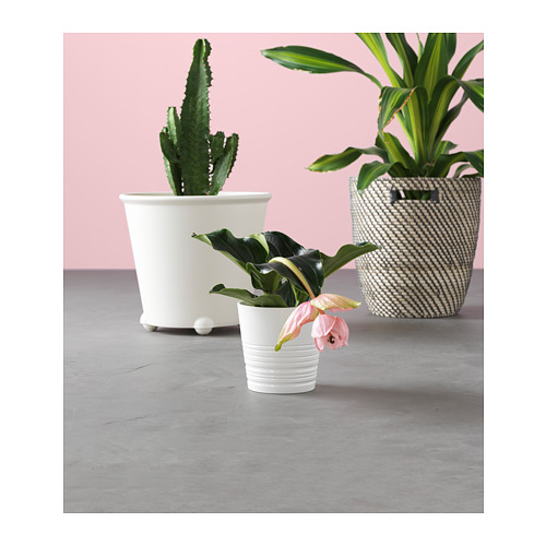 MUSKOT pot tanaman