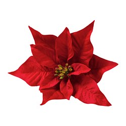VINTER 2020 - Decoration, Poinsettia red