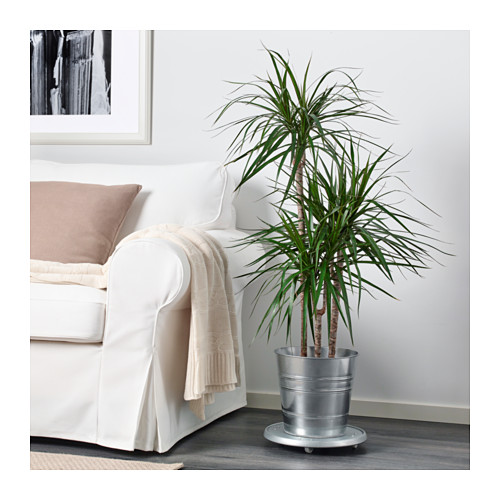 SOCKER pot tanaman