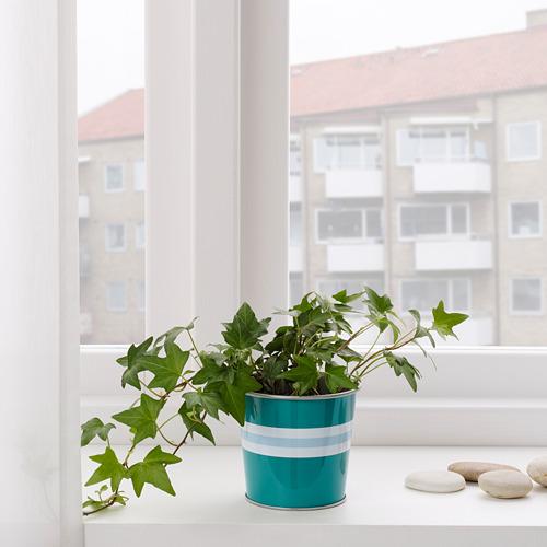 KAKIPLOMMON pot tanaman