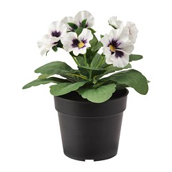 FEJKA - Artificial potted plant, in/outdoor Pansy/white