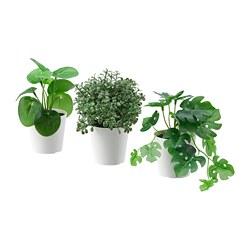 FEJKA - FEJKA, tnmn pot plsu dg pot, set isi 3, dalam/luar ruang hijau, 6 cm