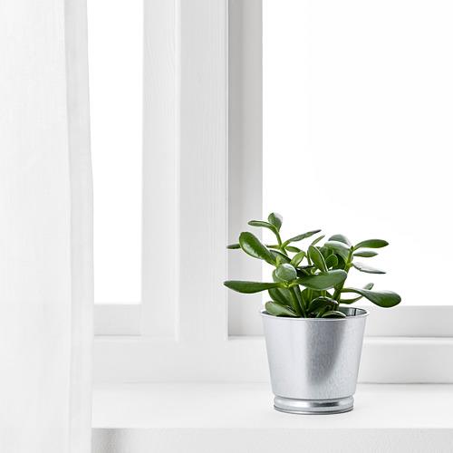 BINTJE - pot tanaman, galvanis, 9 cm | IKEA Indonesia - PE639172_S4