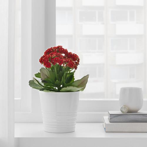 MUSKOT - pot tanaman, putih, 9 cm | IKEA Indonesia - PE697482_S4