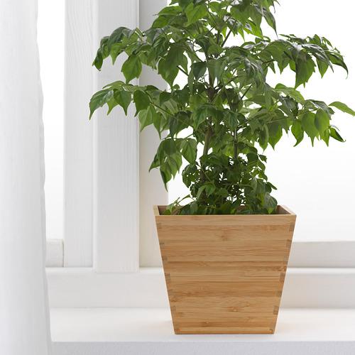 VILDAPEL pot tanaman