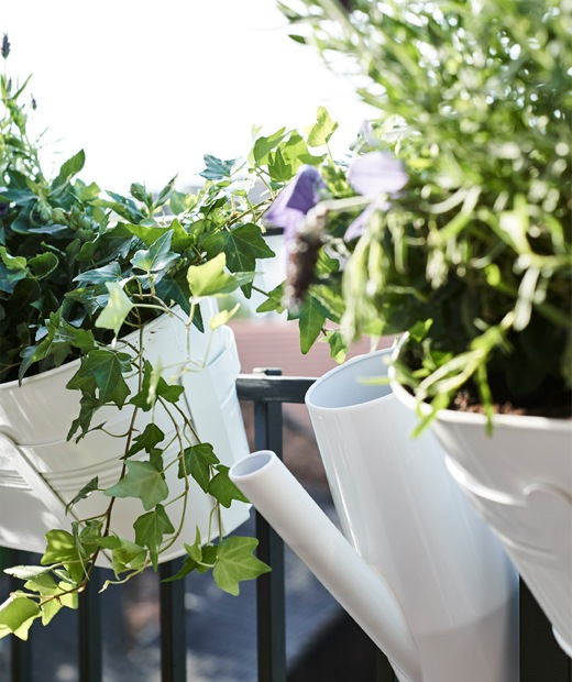 Ivy growing in white pots hanging from balcony railings, and a white watering can.