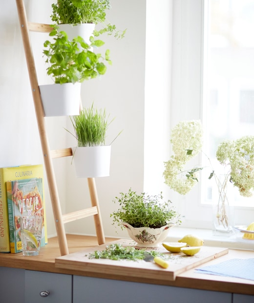 Herbs growing in pots on a ladder plant stand on a wooden worktop and grey kitchen cabinets.