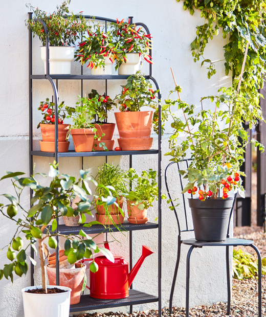 A grey LÄCKÖ steel shelving unit with four shelves and a grey LÄCKÖ steel chair holding vases with edible plants outdoors.