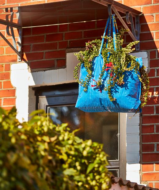 A waterproof, blue FRAKTA carrier bag working as a big hanging vase for a plant.