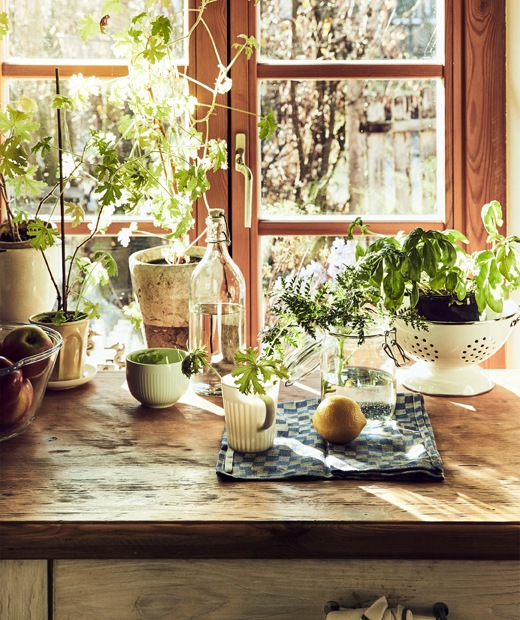 Herbs growing in pots and jars on a wooden countertop in front of a window with wooden frame.