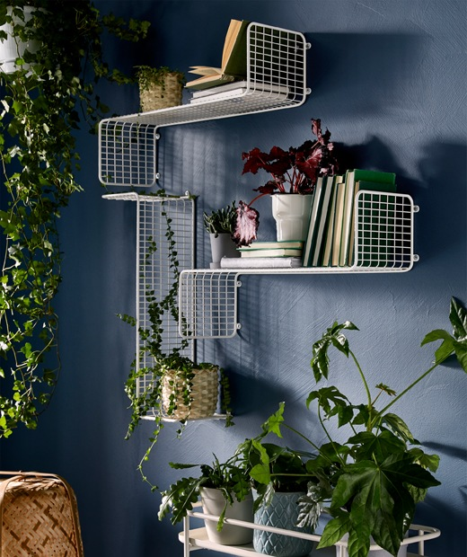 Wall with plants on display in various ways: hung from above; standing on wall shelves together with books; on a plant stand.
