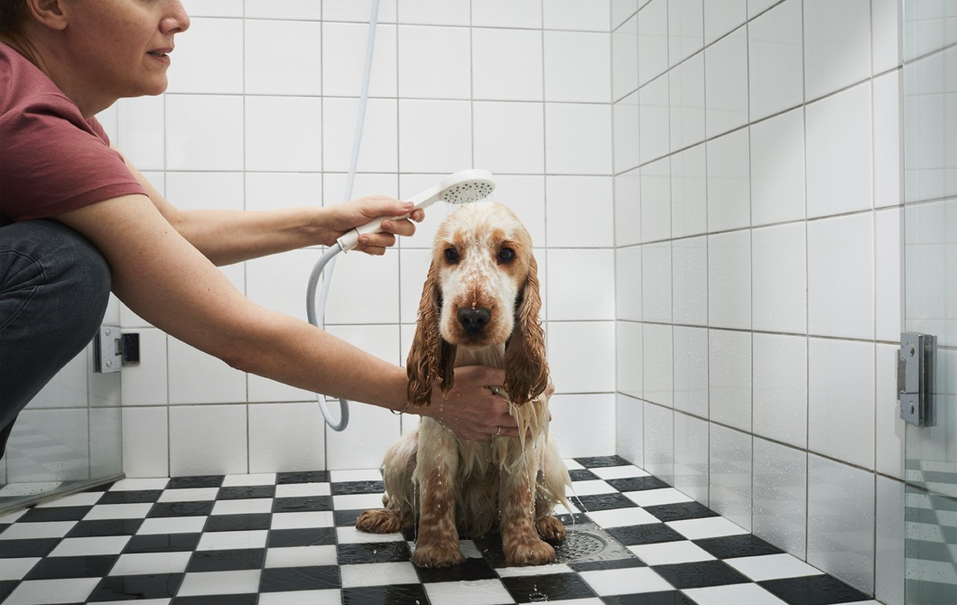 A person holding the shower over a dog in a bathroom.