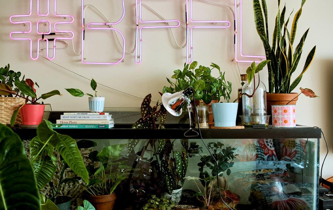 Kamar tidur dengan tanaman pajangan dalam akuarium ikan dan lampu neon berwarna merah muda di dinding bagian atas.