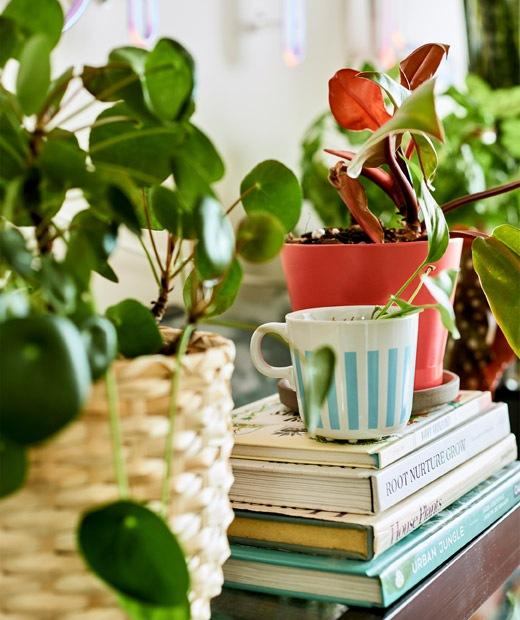 Sebuah tanaman yang ditanam di cangkir teh diletakkan di atas tumpukan buku yang dikelilingi oleh berbagai pot tanaman.