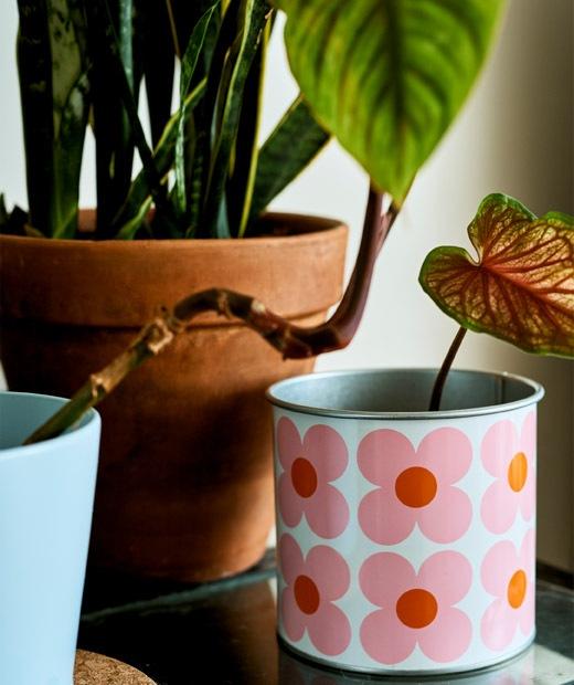 Tanaman bertunas ditanam di pot bunga.