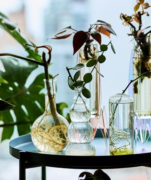 Wadah kaca yang berisi tanaman kecil dan stek yang diletakkan di atas meja baki.