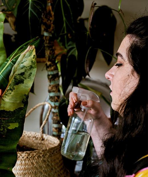 Seorang wanita muda sedang menyirami tanaman dengan botol semprot.