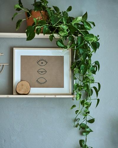 Dua rak pada dinding abu-abu, satu rak memajang tanaman dengan batang daun yang menjalar, rak lainnya memajang bingkai dengan sketsa tiga mata.
