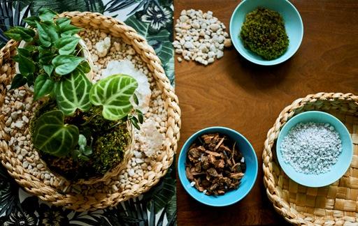 Home visit: a unique table top plant display