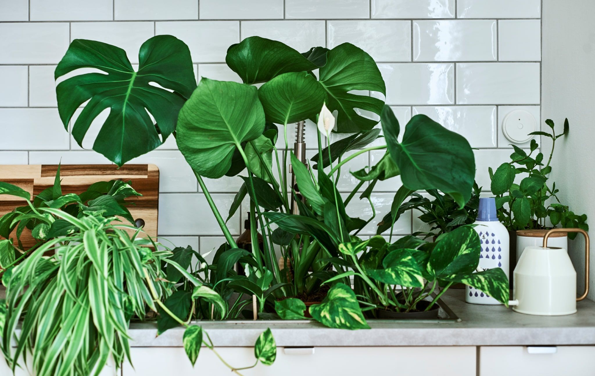 Home visit: how to care for your houseplants